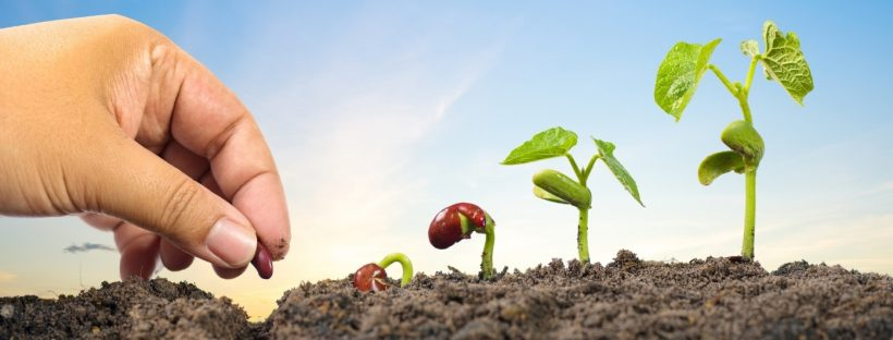 7 Seeds to Plant for Success